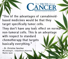 QUOTE-CANNABIS-hemp-Sanchez-Chemotherapy.jpg