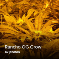 Rancho OG Grow Thumb.png