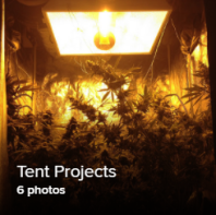 Tent Projects 1 Thumb.png