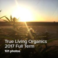 TLO2017 thumb 2.png